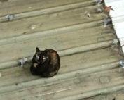 安爵貓的故事-辦公室的食客-13
