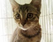 安爵貓的故事-再續貓緣-1